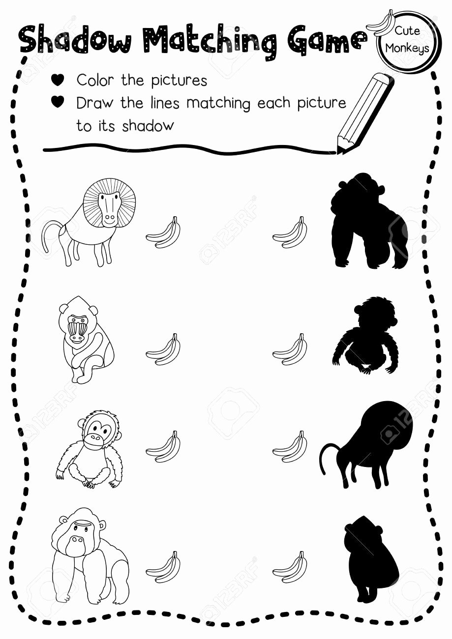 Monkey Worksheets for Preschoolers Fresh Shadow Matching Game Of Primate Monkey Animals for Preschool