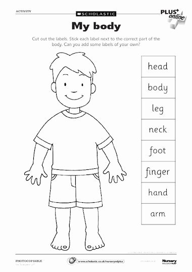 My Body Worksheets for Preschoolers New An Activity Sheet where Children Match the Label to the