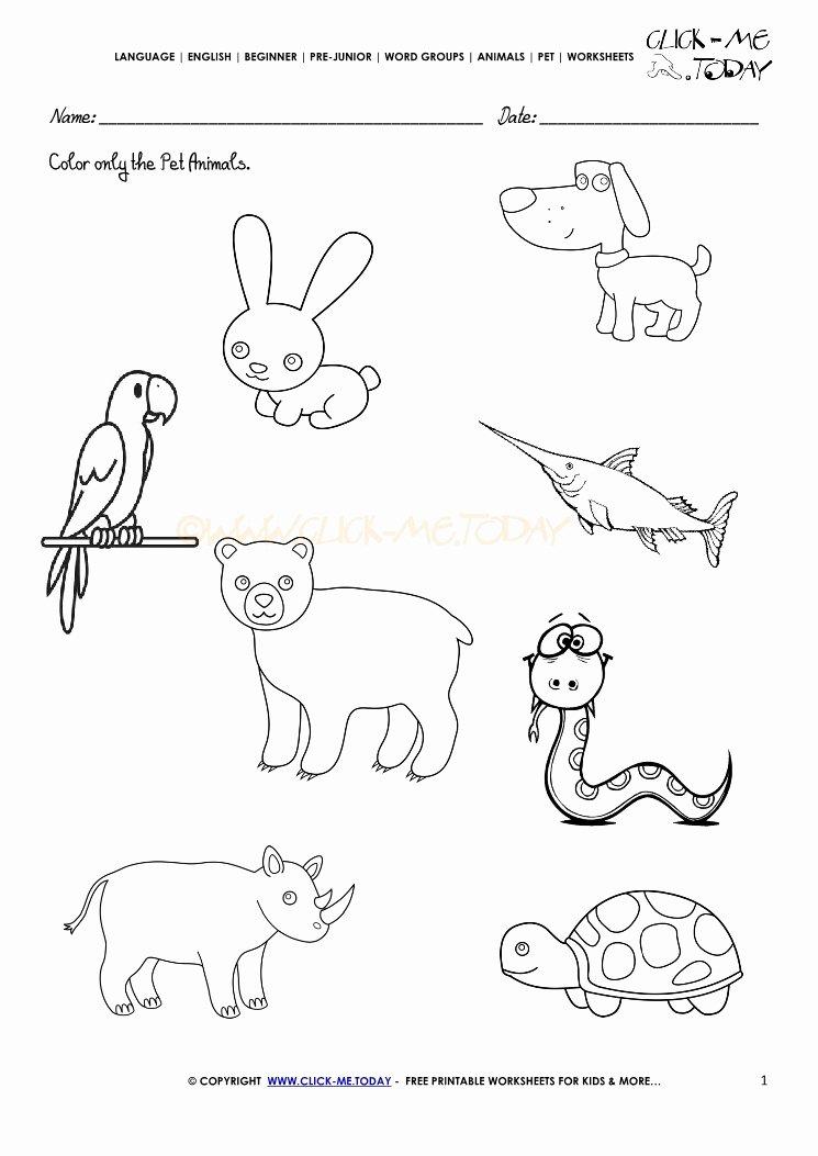 Pet Animals Worksheets for Preschoolers Best Of Pet Animals Worksheet Activity Sheet 1