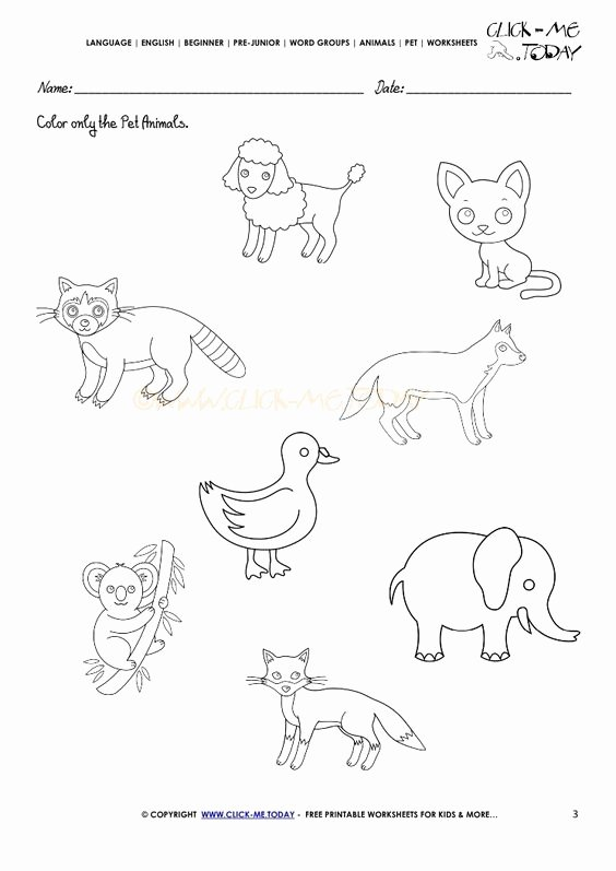 Pet Animals Worksheets for Preschoolers Fresh Pet Animals Worksheet Activity Sheet 3