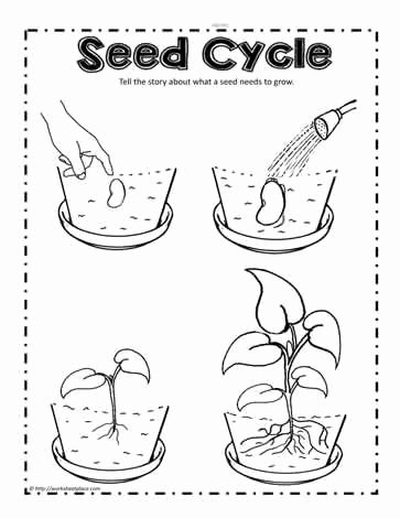 Plant Worksheets for Preschoolers Best Of Parts Of A Plant Worksheetsworksheets