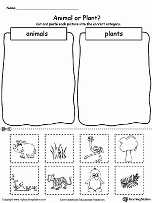 Plant Worksheets for Preschoolers Ideas Animal and Plant sorting