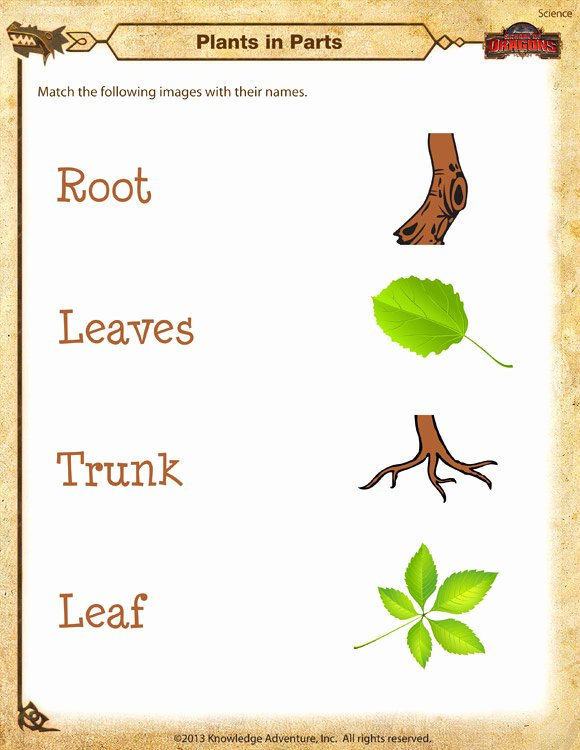 Plant Worksheets for Preschoolers Inspirational Plants In Parts Worksheet Kindergarten Science Printable sod