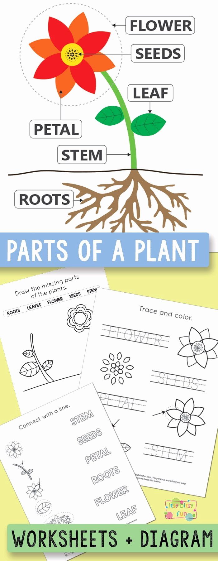 Plant Worksheets for Preschoolers Kids Free Printable Parts Of A Plant Worksheets Itsybitsyfun