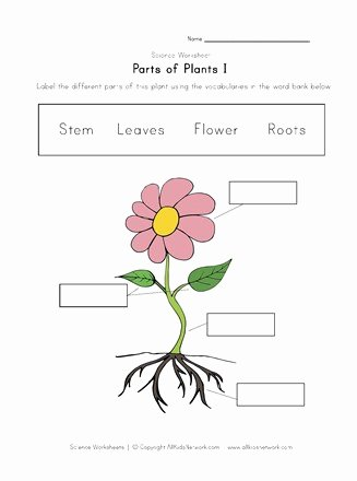 parts of plants worksheet thumbnail preview e cd3f 4fb8 a457 8d2a5640a69d 327x440