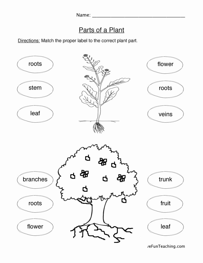 Plant Worksheets for Preschoolers New Plant Parts Worksheet