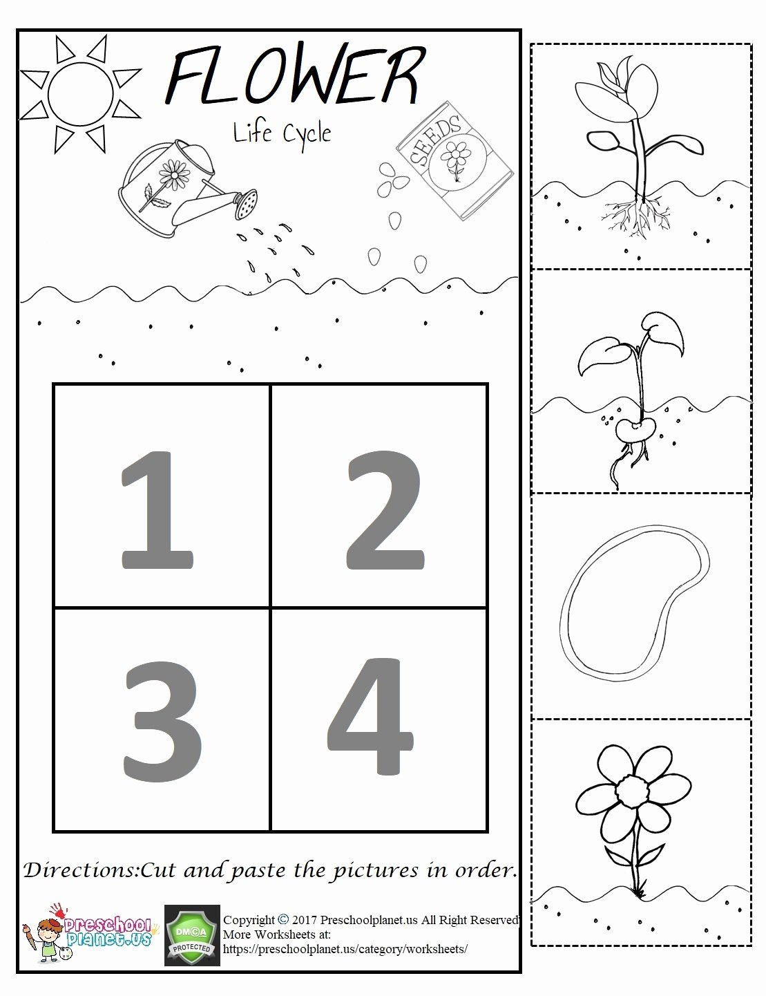 Plant Worksheets for Preschoolers top Flower Life Cycle Worksheet – Preschoolplanet