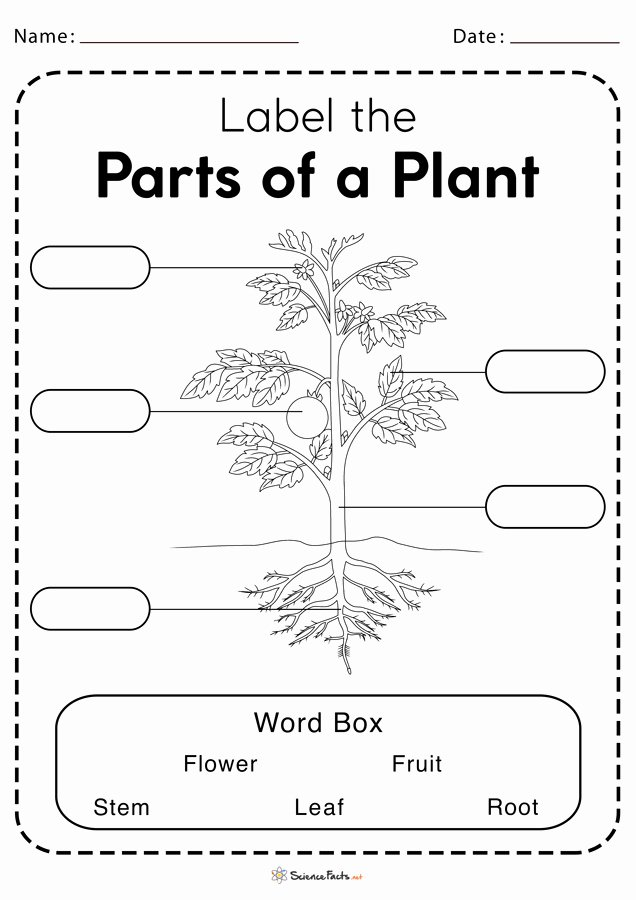Plants Worksheets for Preschoolers Best Of Parts Of A Plant Worksheets