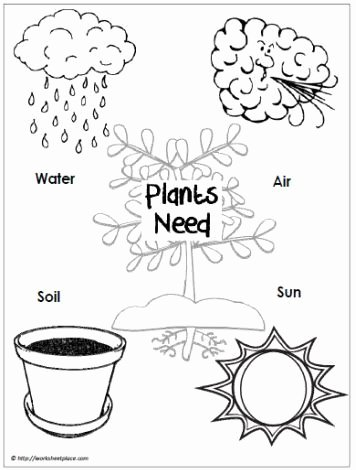 Plants Worksheets for Preschoolers Ideas Use A Graphic Like This to Guide A Scientific Inquiry Do