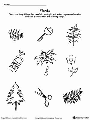 Plants Worksheets for Preschoolers Inspirational Preschool Plants and Animals Printable Worksheets