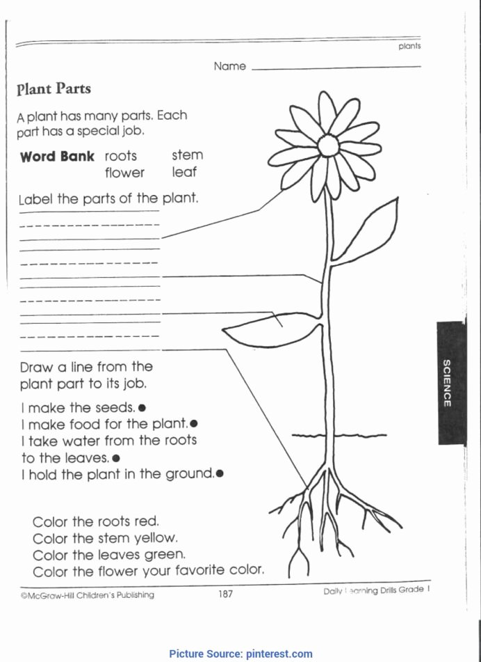 Plants Worksheets for Preschoolers New Best Third Grade Science Activities 1st Worksheets Plant for