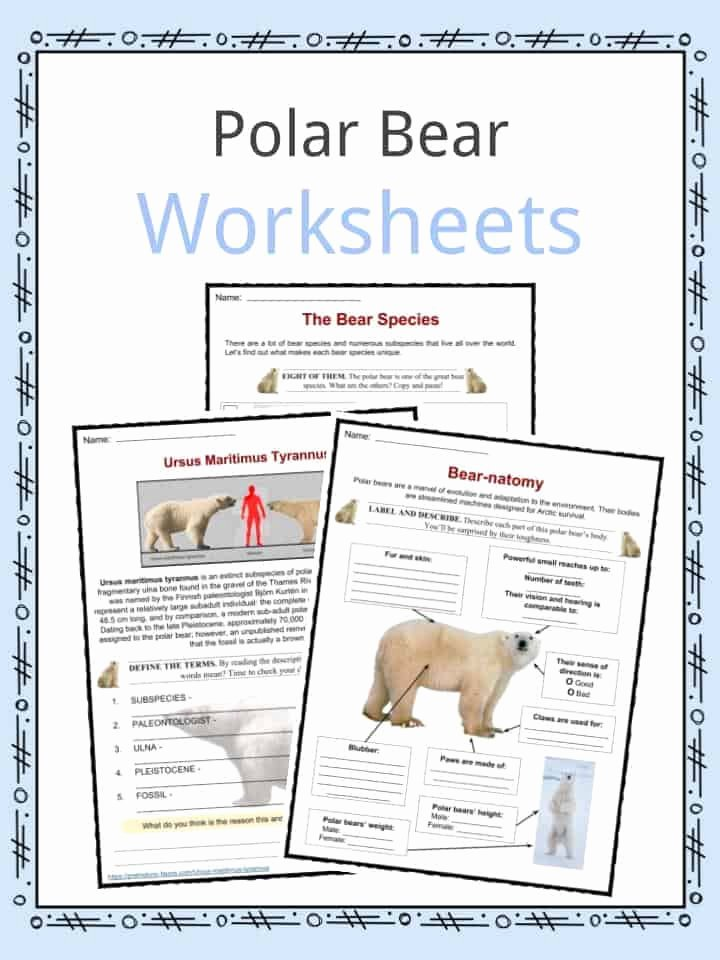 Polar Bear Worksheets for Preschoolers Ideas Polar Bear Facts Worksheets Habitat & Species Information