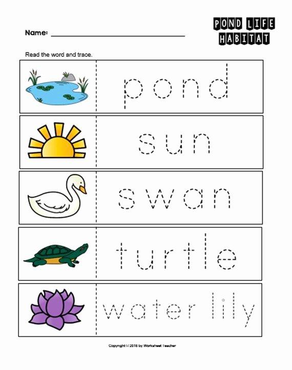 Pond Life Worksheets for Preschoolers Lovely 10 Pond Life Habitat Preschool Curriculum Activities