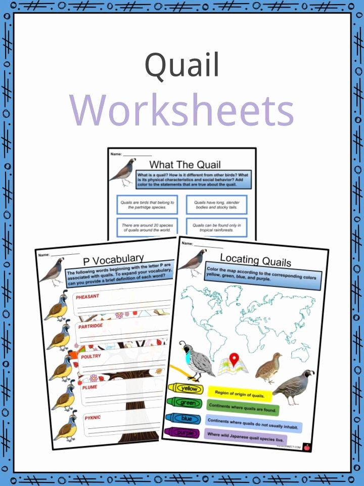 Quail Worksheets for Preschoolers Lovely Quail Facts Worksheets Habitat Diet Characteristics