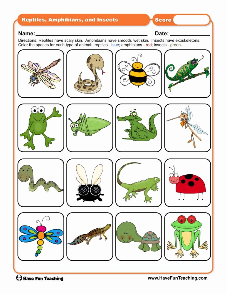 Reptile Worksheets for Preschoolers Best Of Reptiles Amphibians and Insects Worksheet