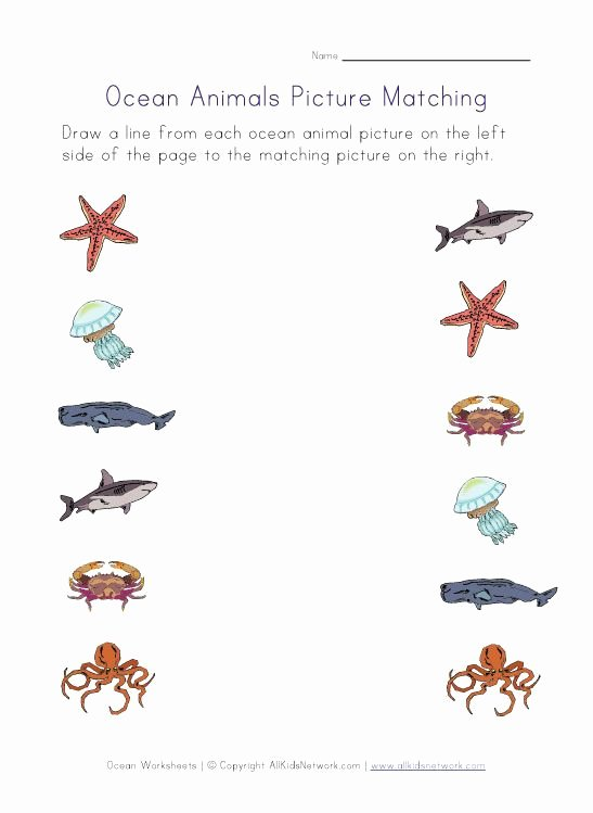 Sea Animals Worksheets for Preschoolers Lovely Ocean Animals Worksheets for Kids
