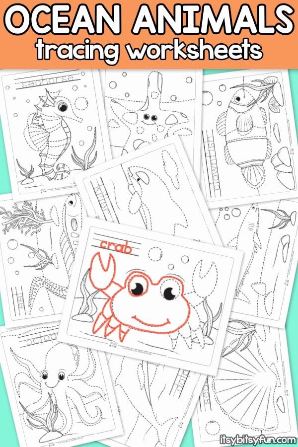 Sea Creatures Worksheets for Preschoolers top Ocean Animals Tracing Worksheets Itsybitsyfun