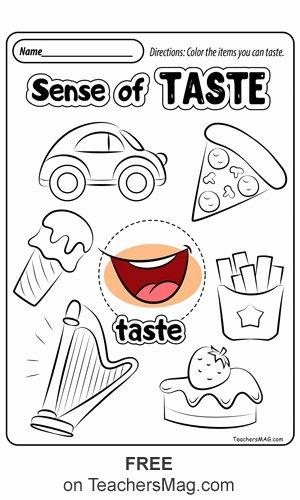 Sense Of Smell Worksheets for Preschoolers Free Free Five Senses Worksheets Teachersmag
