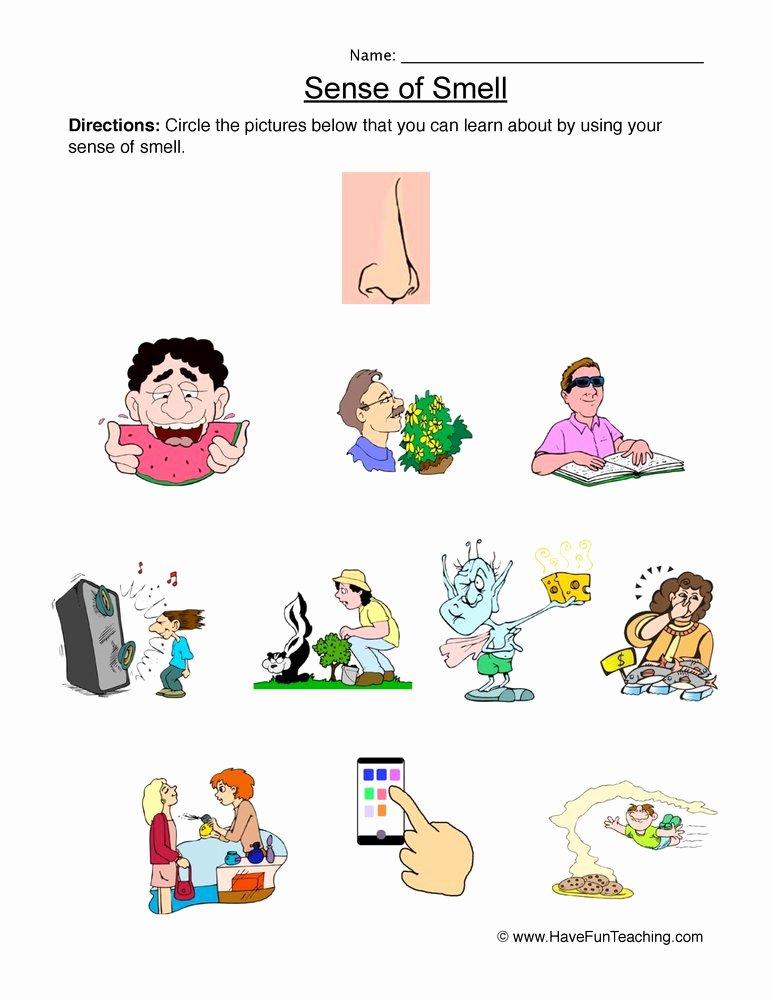 Sense Of Smell Worksheets for Preschoolers Fresh Senses Smell Worksheet