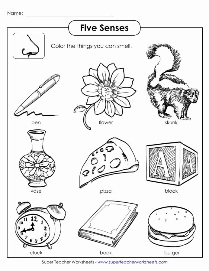 Sense Of Smell Worksheets for Preschoolers Fresh Worksheet Senses Printable Worksheets and 5 Grade Games