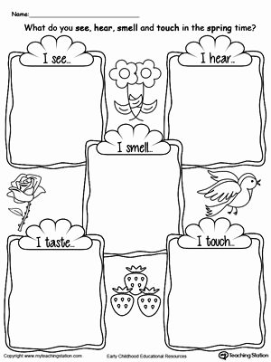 Sense Of Smell Worksheets for Preschoolers Lovely the Five Senses In the Spring Time