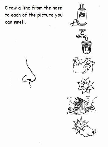 Sense Of Smell Worksheets for Preschoolers New 5 Senses Worksheet for Kids 6