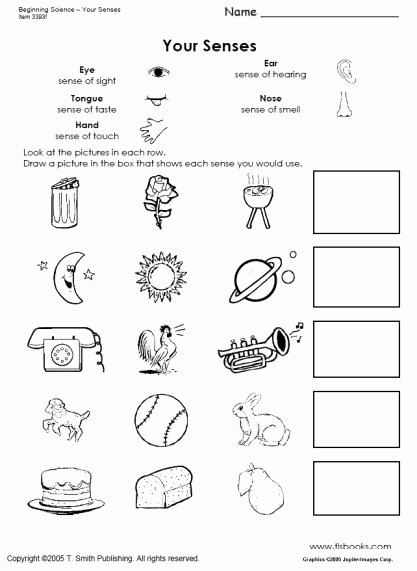 Sense Of Smell Worksheets for Preschoolers Printable Beginning Science Unit About Your Five Senses