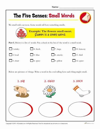 Sense Of Smell Worksheets for Preschoolers Printable Five Senses Activity for Kindergarten and 1st Grade