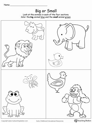 Size Comparison Worksheets for Preschoolers Fresh Paring Animals Sizes Big and Small