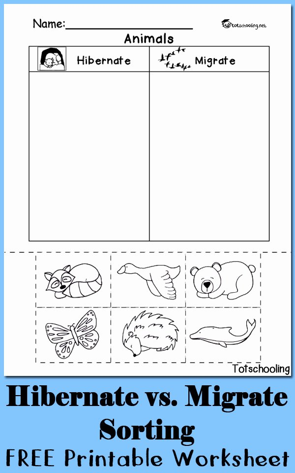Sorting Math Worksheets for Preschoolers Kids Hibernation Vs Migration Animal sorting Worksheet