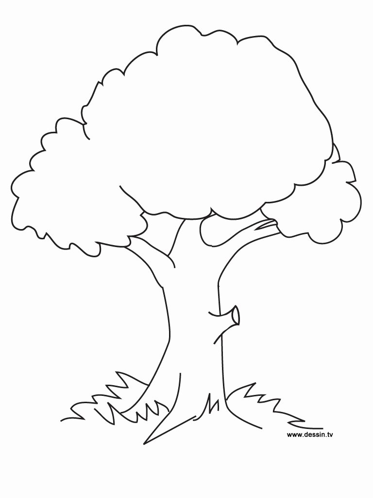Tree Coloring Worksheets for Preschoolers Fresh Coloring Pages Trees