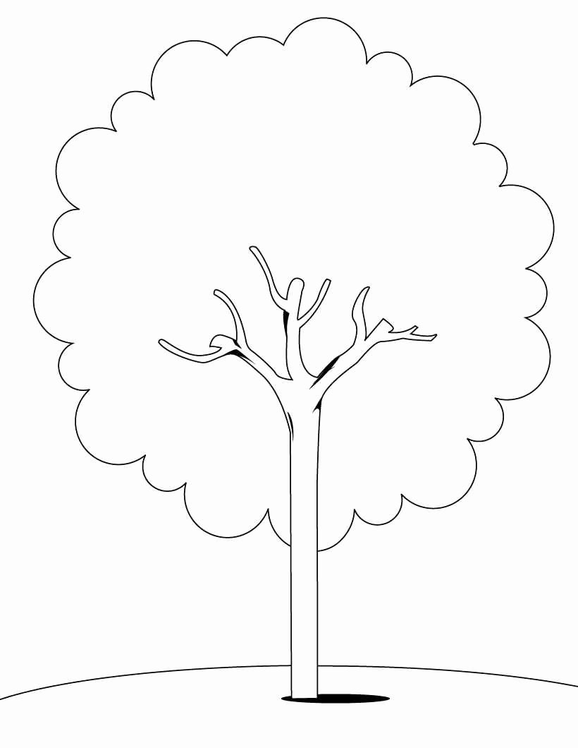 Tree Coloring Worksheets for Preschoolers Lovely Tree Coloring Pages