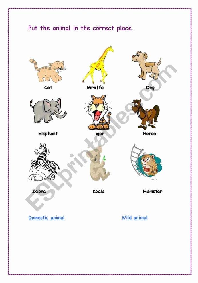 Wild Animal Worksheets for Preschoolers Lovely Domestic Animals and Wild Animals Worksheets Worksheets
