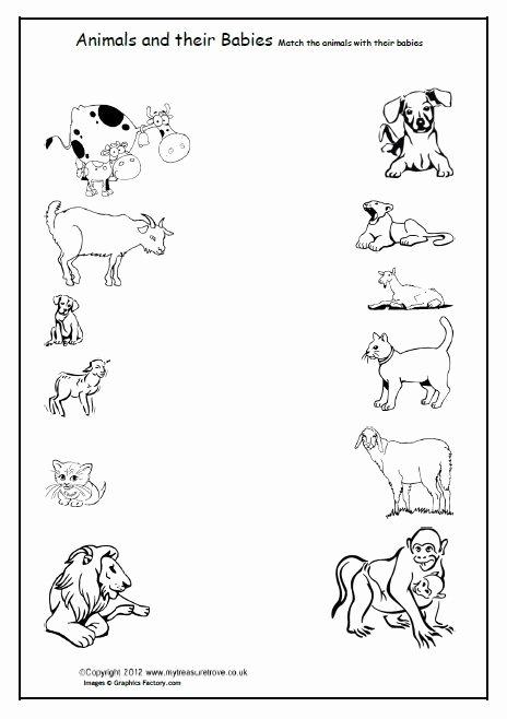 Wild Animal Worksheets for Preschoolers New Variety Wild Animal Best Blog Kindergarten Wild Animals