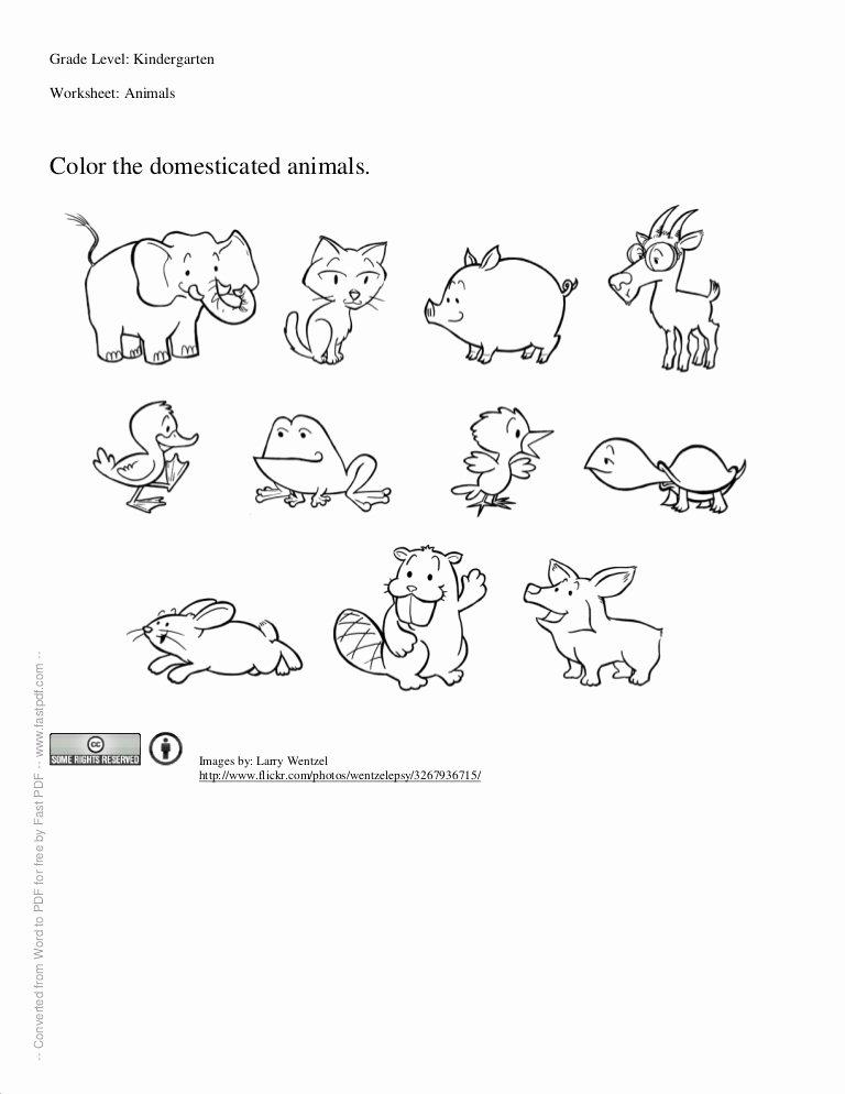 Wild Animal Worksheets for Preschoolers New Worksheet for Kindergartners