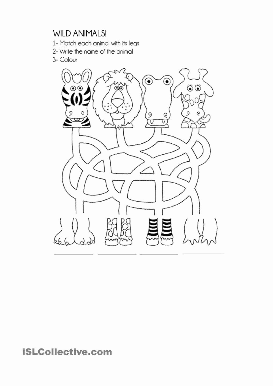 Wild Animal Worksheets for Preschoolers Printable Wild Animals