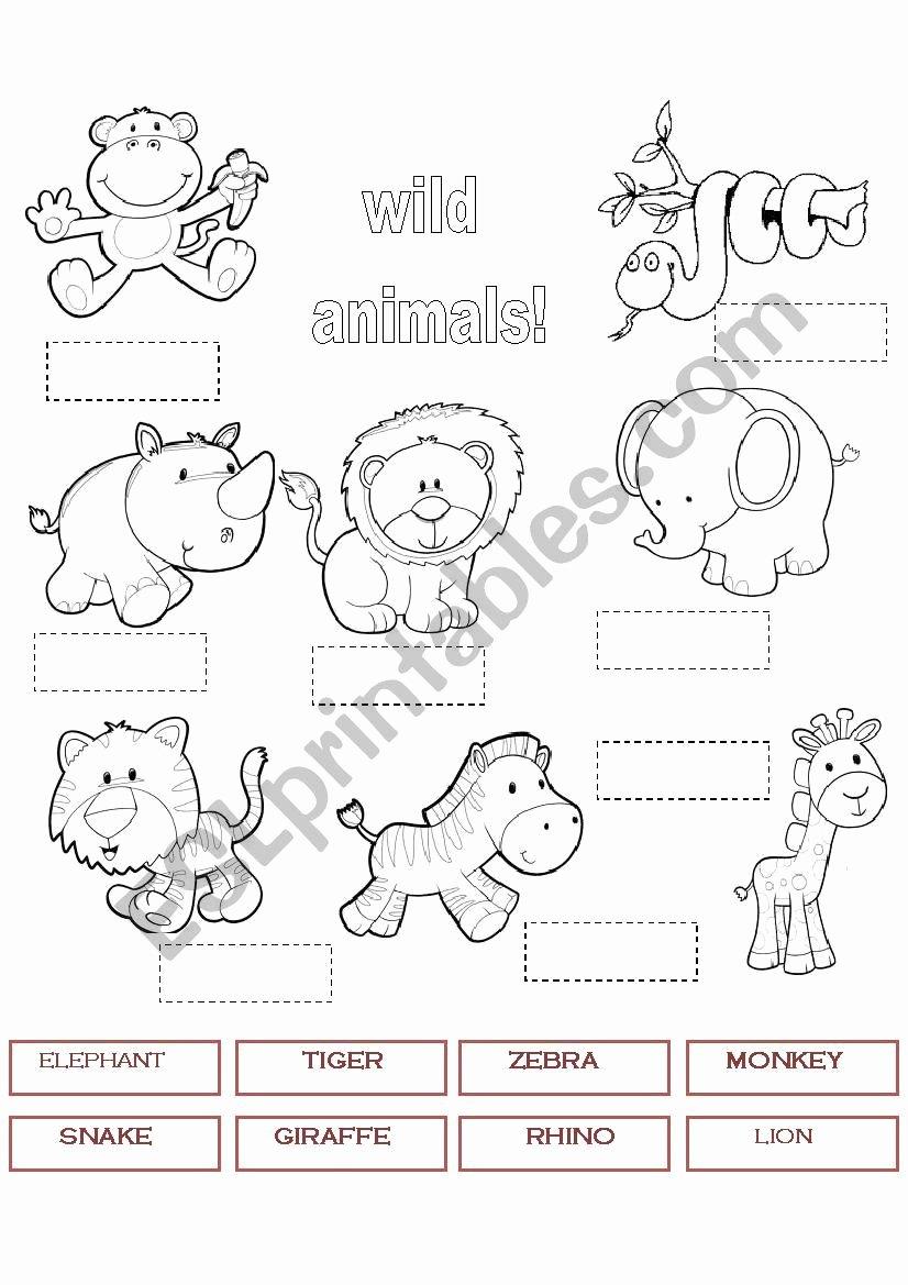 Wild Animal Worksheets for Preschoolers top Wild Animals 1 Worksheet
