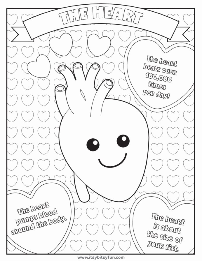 Worksheets for Preschoolers Human Body Best Of Pin by Candi Caspers Humanbody Human Body Worksheets