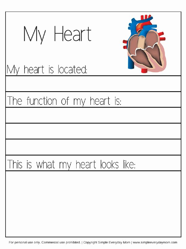 Worksheets for Preschoolers Human Body Free Human Body Worksheets for Kindergarten & Up