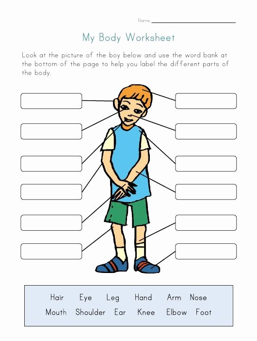 Worksheets for Preschoolers Human Body Inspirational Pin On Espanol