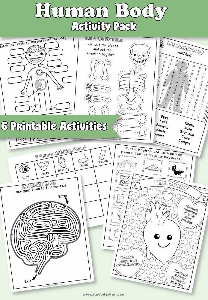 Worksheets for Preschoolers Human Body Kids Human Body Worksheets Itsybitsyfun