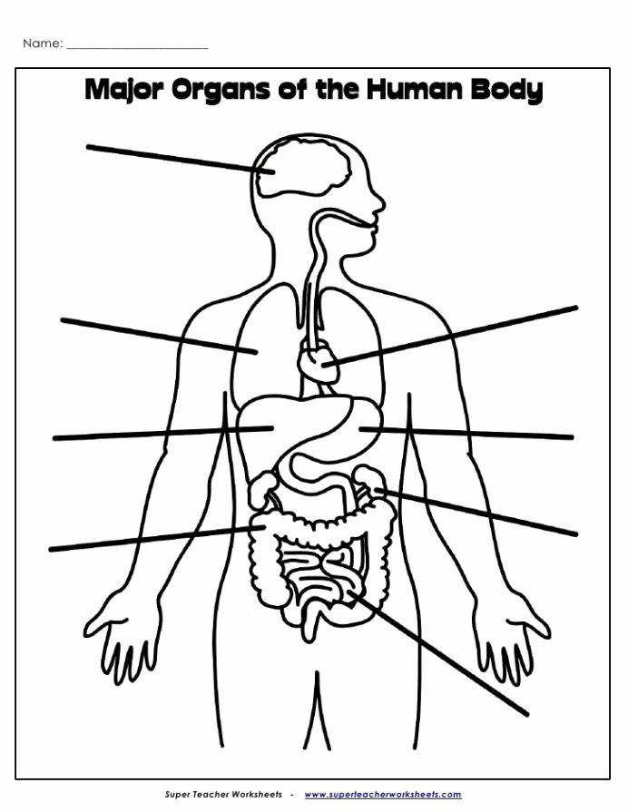 Worksheets for Preschoolers Human Body Printable organs Label Human Body Super Teacher Worksheets Dividing