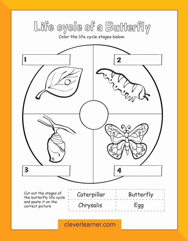 Worksheets for Preschoolers In Science Printable butterfly Life Cycle Preschool Worksheet Preschool