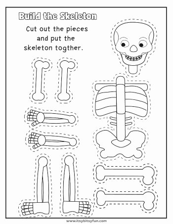 Worksheets for Preschoolers My Body Fresh Human Body Worksheets Itsybitsyfun
