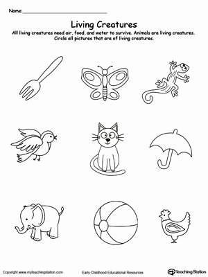 Worksheets for Preschoolers On Animals Free Understand Living Things Animals