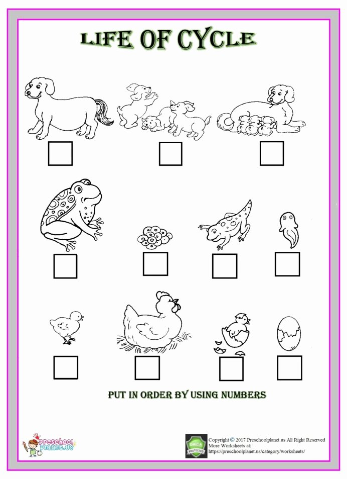 Worksheets for Preschoolers On Animals Fresh Life Cycle Animals Worksheet Preschoolplanet Animal