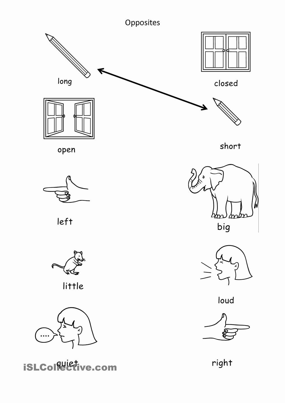 Worksheets for Preschoolers Opposites Inspirational Opposites
