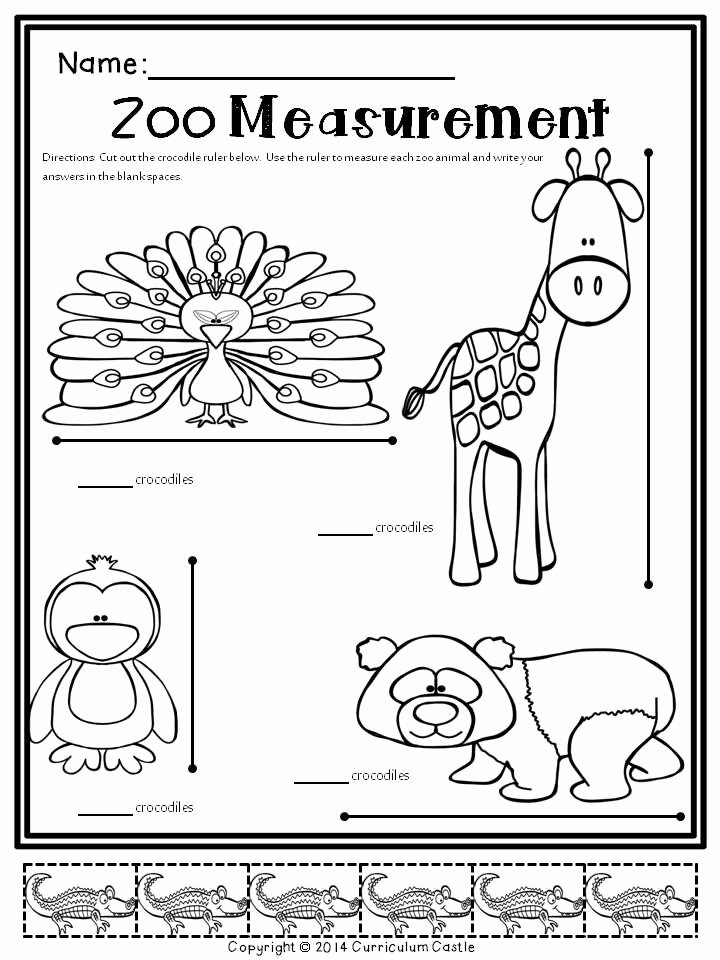 Zoo Animal Math Worksheets for Preschoolers Ideas Sub Plans Zoo Math & Literacy Activities Substitute Kit