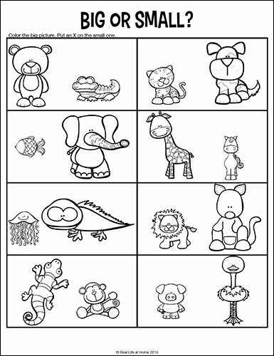 Worksheets for Preschoolers On Big and Small Lovely Opposites Worksheets for Kindergarten and Preschool