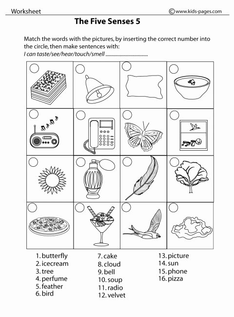 Worksheets for Preschoolers On the Five Senses Lovely Five Sense Worksheet New 162 Free Five Senses Worksheets